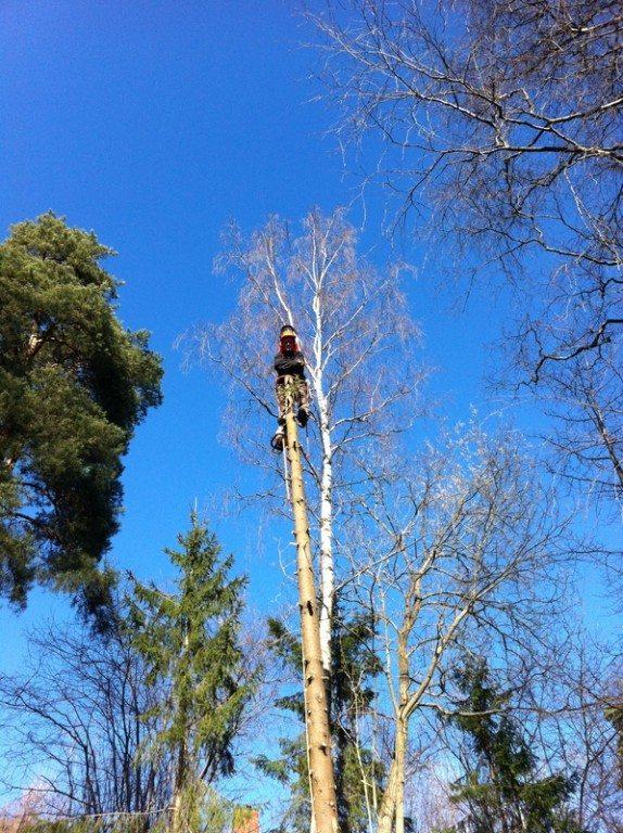 aktiv skogpleie, trefelling, seksjonsfelling, planting, rydding, linjerydding, stubbefresing, vedlikehold - Tjenester